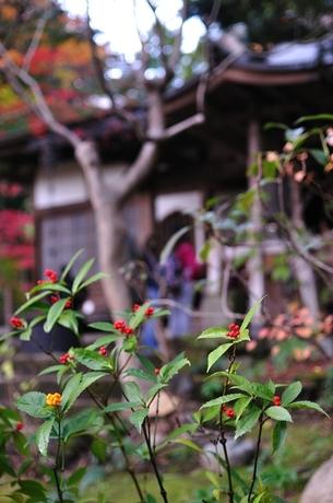 神奈川県鎌倉市覚園寺写真現像