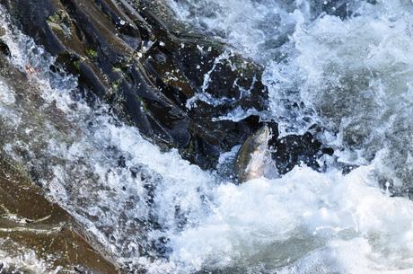 北海道からふとます川登り写真