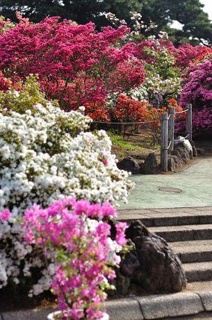群馬県館林市つつじヶ岡公園写真
