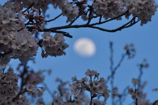 奈良県吉野山展望台一目千本桜写真