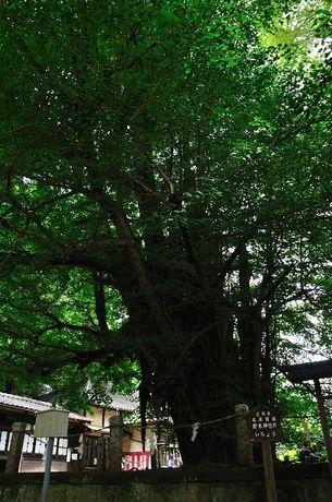 茨城県古河市野木神社写真