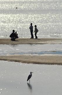 広島県宮島海岸画像